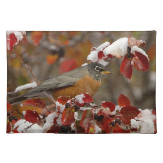Male American Robin in Black Hawthorn Placemats