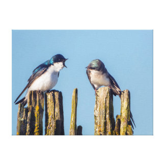 Male and female Tree Swallow Canvas Prints