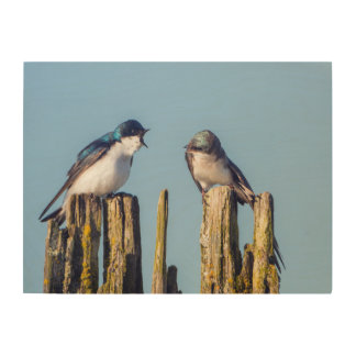 Male and female Tree Swallow Wood Canvases