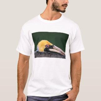 Male Brown Pelican (Pelecanus occidentalis) in T-Shirt