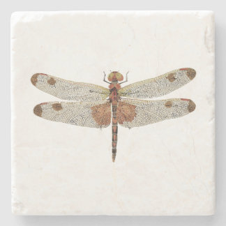 Male Calico Pennant Dragonfly Coaster