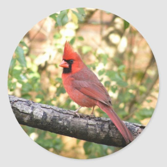 MALE CARDINAL CLASSIC ROUND STICKER