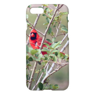 Male Cardinal Photo iPhone 7 Glossy Case