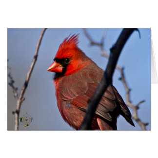 Male Cardinal Winter Trees Lee Hiller Photography Card