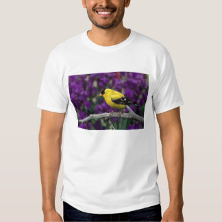 Mâle, chardonneret américain dans le plumage t shirt