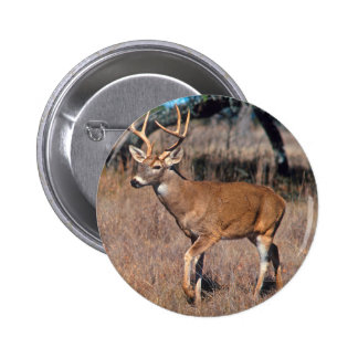 Male Deer Buck With Antlers Button