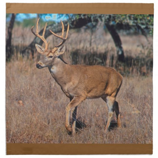 Male Deer Buck With Antlers Napkins