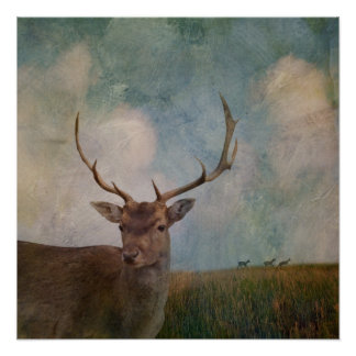 Male Deer with antlers Poster