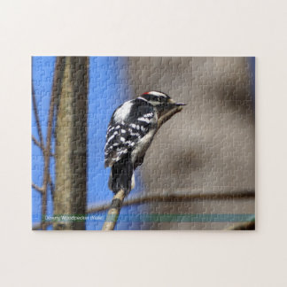 Male Downy Woodpecker Puzzle