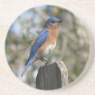 Male Eastern Bluebird Coaster