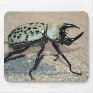 Male Eastern Hercules Beetle Mousepad