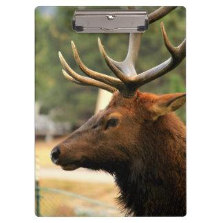 Male Elk Clipboard