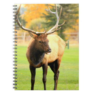 Male Elk With Tongue Out Spiral Note Book