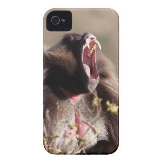 Male gelada baboon (Theropithecus gelada) Case-Mate iPhone 4 Case