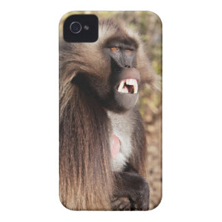 Male gelada baboon (Theropithecus gelada) Case-Mate iPhone 4 Cases