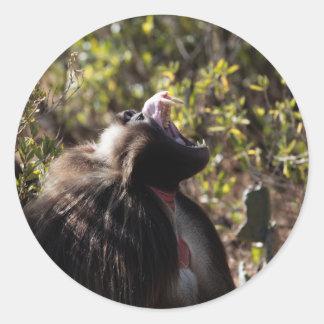 Male gelada baboon (Theropithecus gelada) Classic Round Sticker