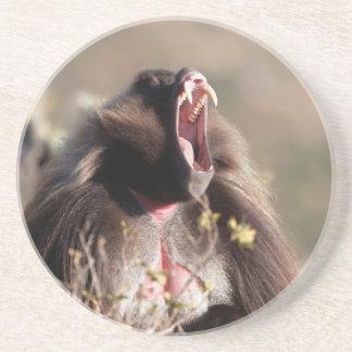 Male gelada baboon (Theropithecus gelada) Coaster
