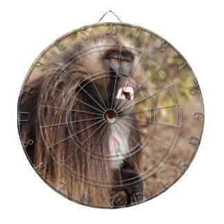 Male gelada baboon (Theropithecus gelada) Dartboard