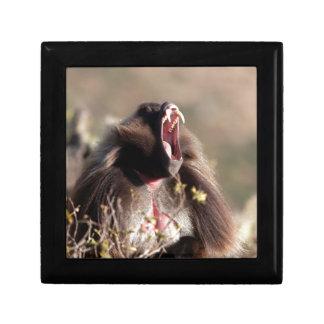 Male gelada baboon (Theropithecus gelada) Gift Box