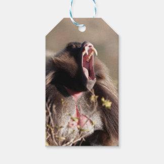 Male gelada baboon (Theropithecus gelada) Gift Tags