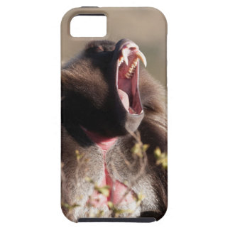 Male gelada baboon (Theropithecus gelada) iPhone 5 Case