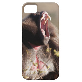 Male gelada baboon (Theropithecus gelada) iPhone 5 Cover