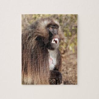 Male gelada baboon (Theropithecus gelada) Jigsaw Puzzle