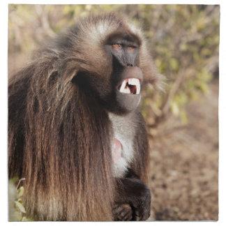 Male gelada baboon (Theropithecus gelada) Napkin