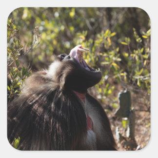 Male gelada baboon (Theropithecus gelada) Square Sticker