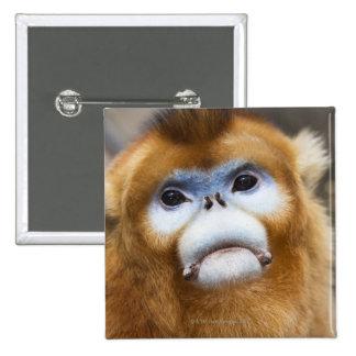 Male Golden Monkey Pygathrix roxellana, portrait 2 Inch Square Button