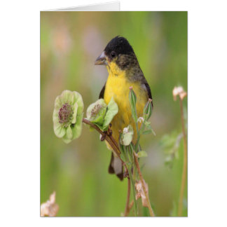 Male Goldfinch Card