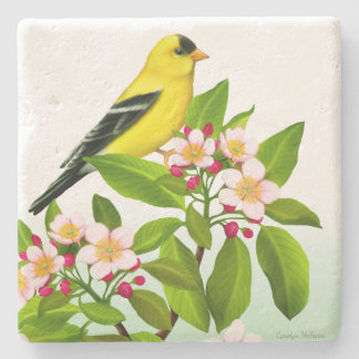 Male Goldfinch in Apple Tree Blossoms Coaster Stone Coaster