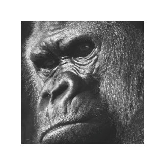 Male Gorilla Canvas Print