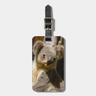 Male Koala Personalize Luggage Tag
