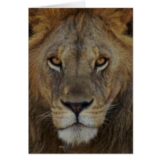 Male Lion Card