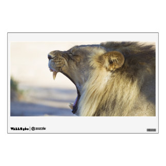 Male Lion Giving a Big Yawn or Growl Wall Decal