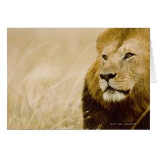 Male lion (Panthera leo) portrait, Masai Mara Card