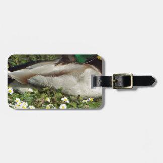 Male Mallard Duck Bag Tag