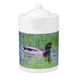 Male mallard duck floating on the water