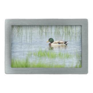 Male mallard duck floating on the water belt buckle