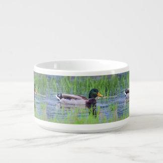 Male mallard duck floating on the water bowl