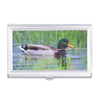 Male mallard duck floating on the water business card holders