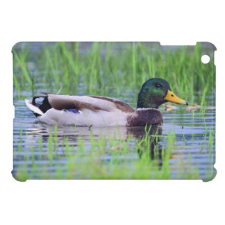 Male mallard duck floating on the water cover for the iPad mini