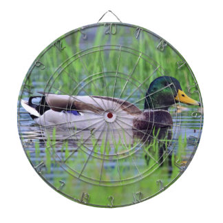 Male mallard duck floating on the water dartboard