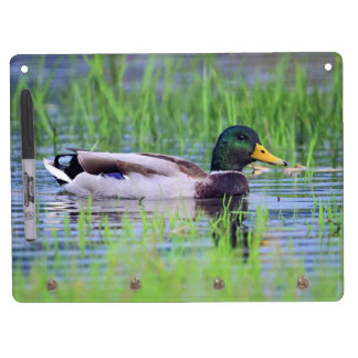 Male mallard duck floating on the water dry erase board with keychain holder