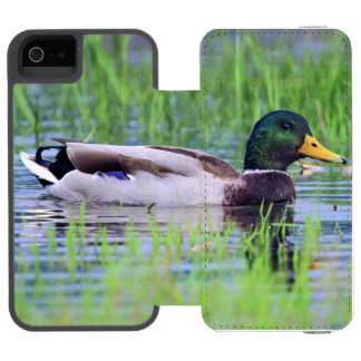 Male mallard duck floating on the water incipio watson™ iPhone 5 wallet case