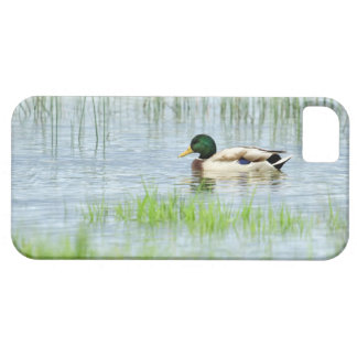 Male mallard duck floating on the water iPhone 5 cases