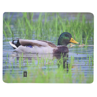 Male mallard duck floating on the water journal