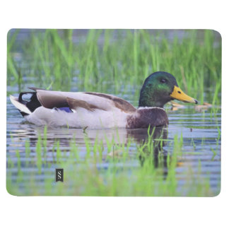 Male mallard duck floating on the water journals