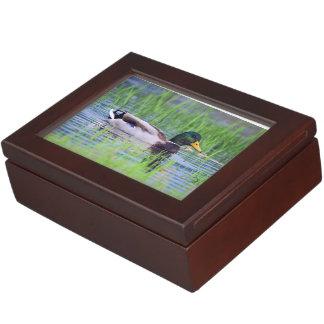 Male mallard duck floating on the water keepsake box